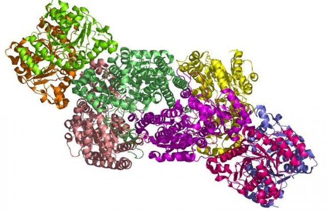 A nitrogenase is a single complex comprised of several protein subunits.