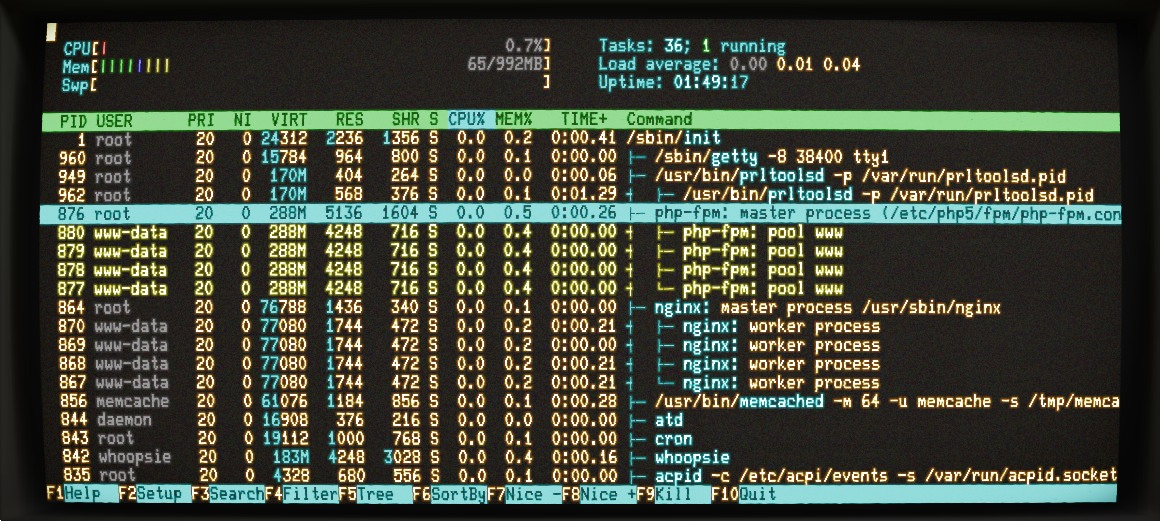 "The virtual machine I've been building with the tutorial, with PHP-FPM master and worker processes highlighted. (This process display is <a href=""http://htop.sourceforge.net/"">htop</a>.)"