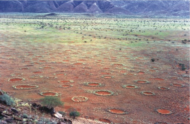 "By building ""fairy circles,"" termites engineer their own ecosystem"