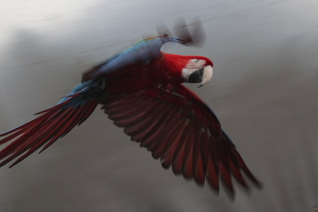 Study: early birds had four wings