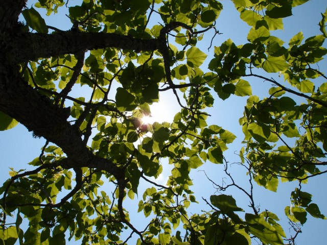 Tree-based solar cells point the way to recyclable energy sources