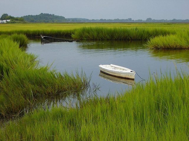 Salt marsh in Poquosen, Virginia