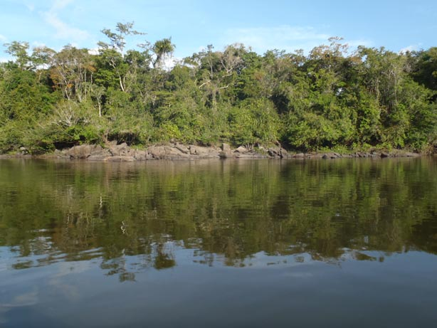 The lush tropical forests that are currently found along the Xingu river.