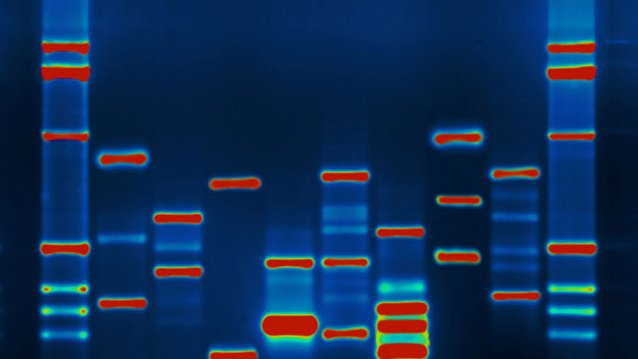 Supreme Court blocks patenting of genomic DNA (Updated)