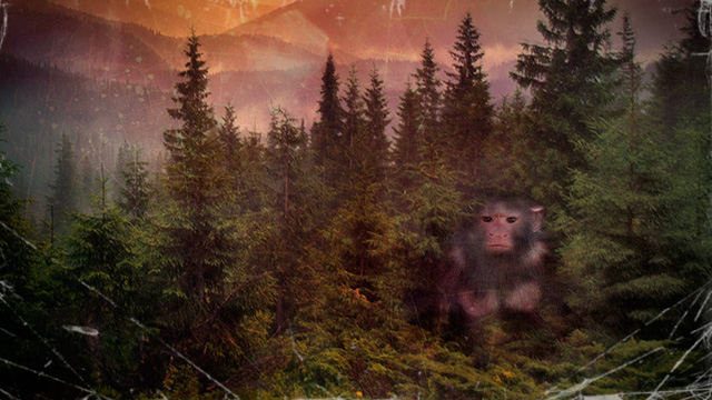 "How the attempt to sequence ""Bigfoot's genome"" went badly off track"