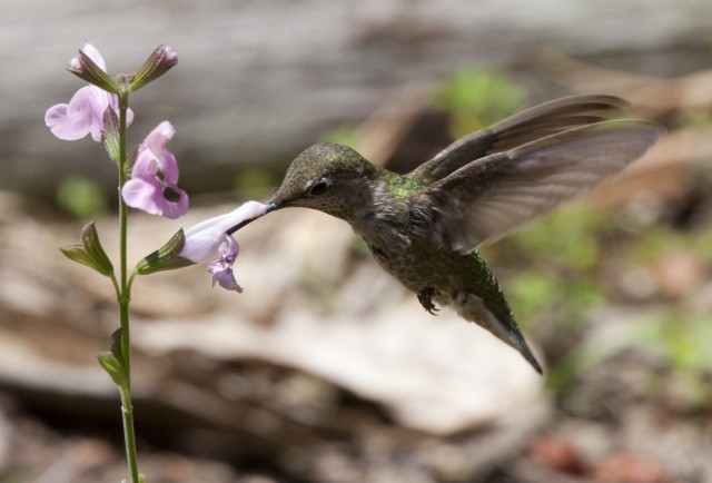 Blooming flowers evolved faster than their animal partners