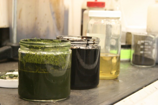 From left to right:  algae, biocrude, and fuel refined from the biocrude.