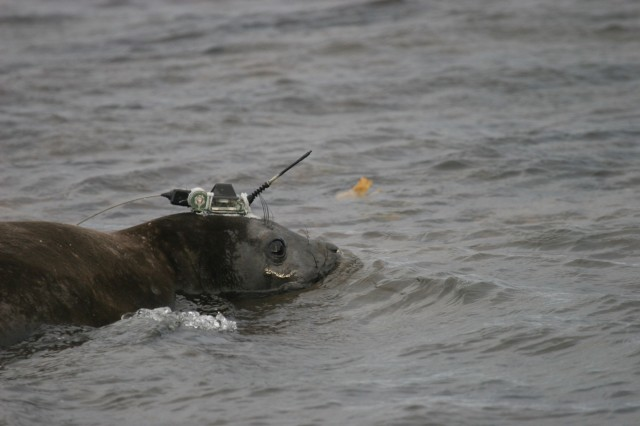 Seals lend scientists a helping flipper in the Southern Ocean