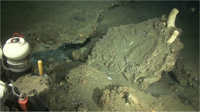 Precipitated carbonate at one of the sites of methane seepage.