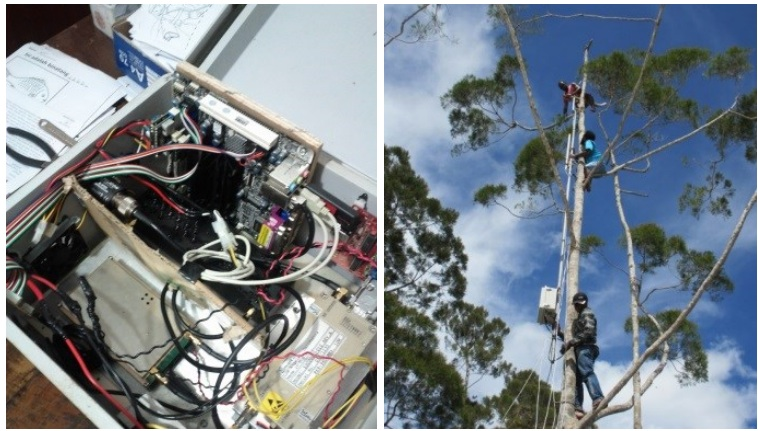 The Desa network box and the tree it was installed in.