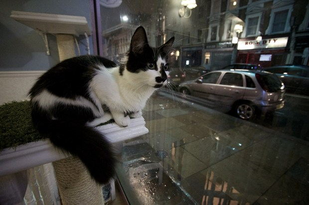 This is London's first cat cafe, Lady Dinah's Cat Emporium