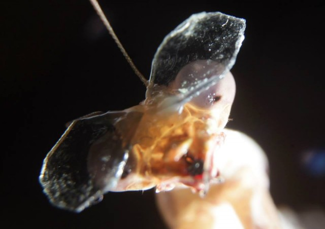 Lab gets funding to put 3D goggles on praying mantises
