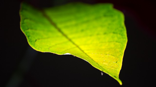 Chloroplasts, the plant powerhouses, send signals to roots