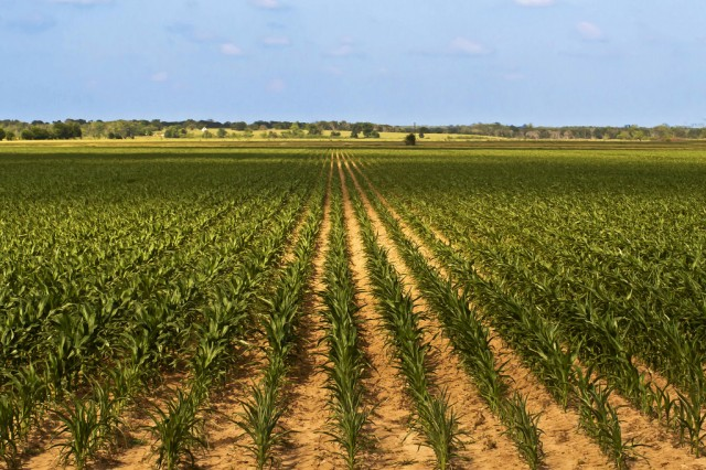 US corn yields are growing, but so is sensitivity to drought