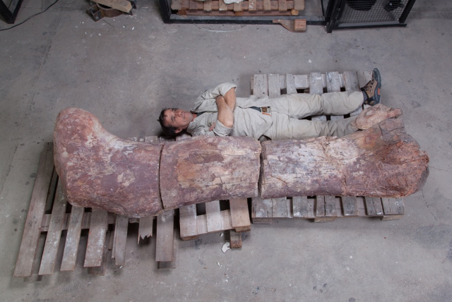 Over 130 ft long, new sauropod may be the largest dinosaur yet discovered