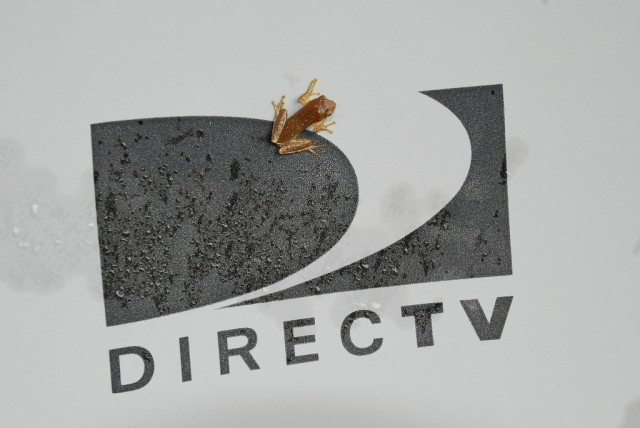 "DirecTV will broadcast live 4K content by ""early next year"""
