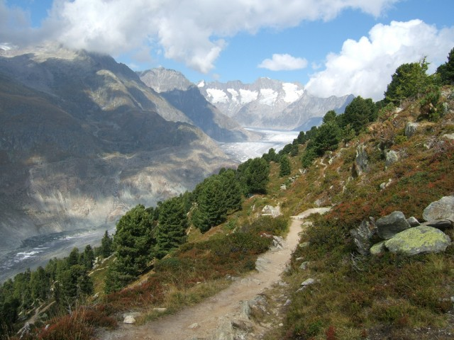 Swiss pines and Switzerland's Aletsch Glacier.