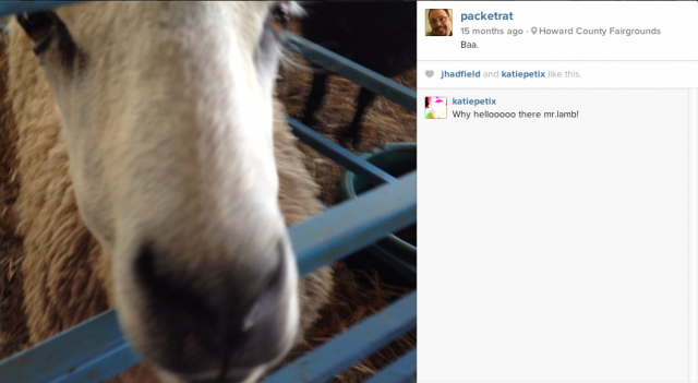 This isn't the only way Instagram and sheep are related.