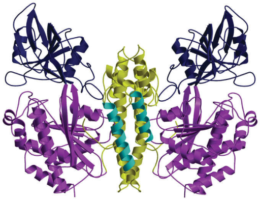 Transferrin, and the iron it carries, are brought inside human cells by this receptor.