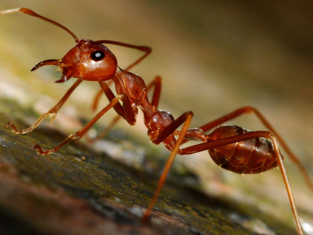 этом качестве картинка мурашка фото обустроить помещение, какое