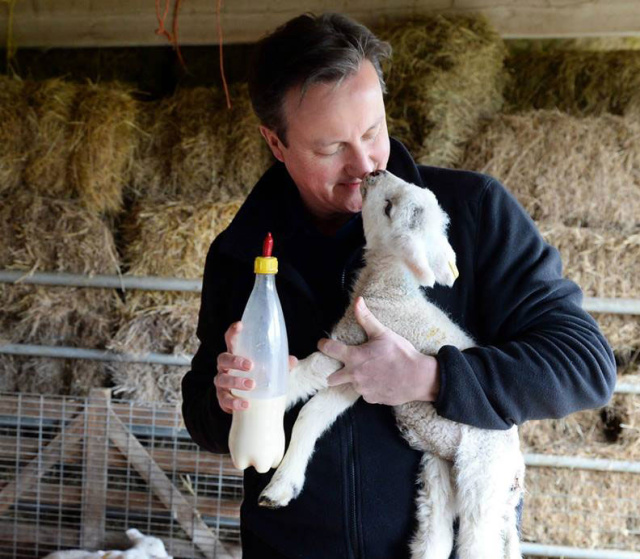 The UK's current prime minister, David Cameron, enjoying an intimate moment with a lamb.