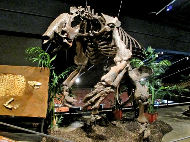 The incredible giant ground sloth, like this reconstruction at the Houston Museum of Natural Science, was among the species that spread from South America to North America.