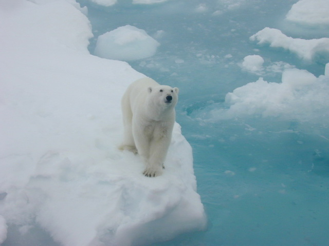 Carbon emissions put sixteen percent of species at risk of extinction