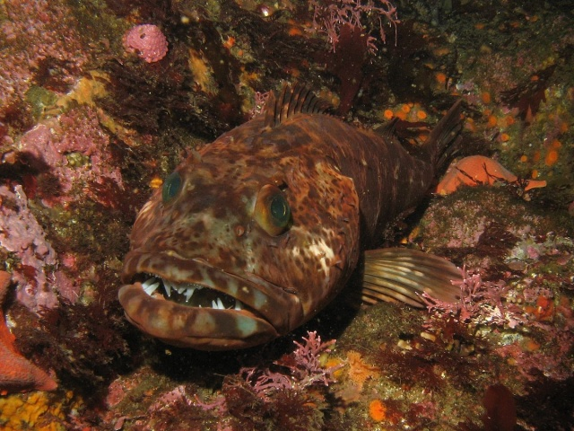 Familiar fishes found opportunity in mass extinction