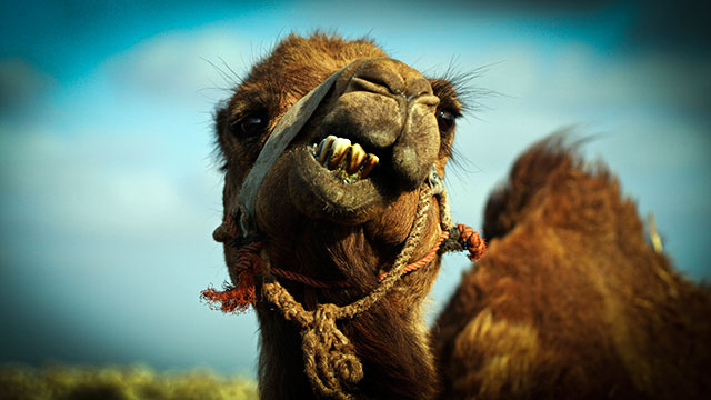 Like moody camels, juvenile Internet comments are everywhere, once you start looking for them.