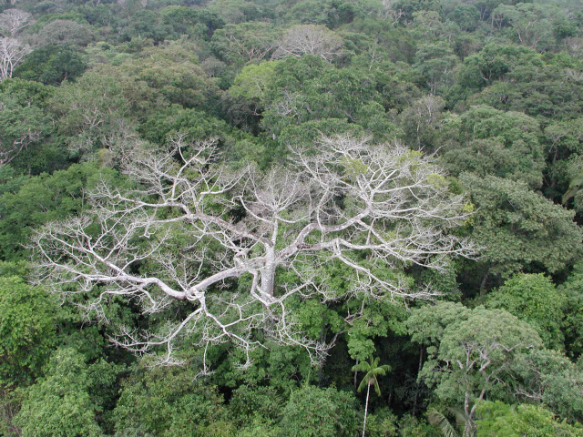 Climate change will make the Amazon rainforest less rainy