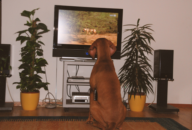 These cable TV prices are ruff!