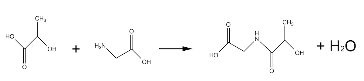 In a similar reaction you can form a bond between lactic acid and an amino acid. While this reaction doesn't normally occur, the amino acid can replace a lactic acid in an existing chain.