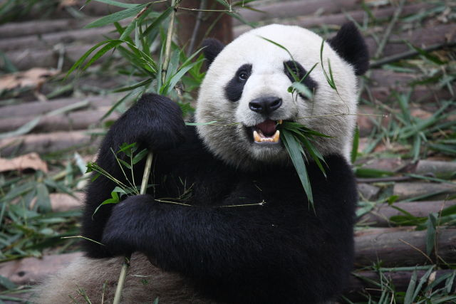 Emissary Panda wants to eat all the industrial data—and has hacked hundreds of sites to target people with access to it.