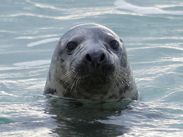 50 years after its death, Thames is again home to seals, whales, and dolphins