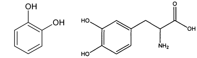 Catechol (left) and Dopa can both hydrogen bond or stick to metal ions.