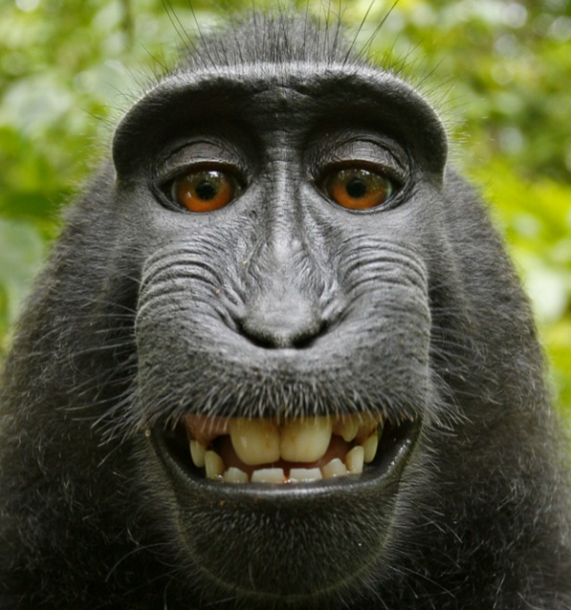 Court rules animals can't own selfies