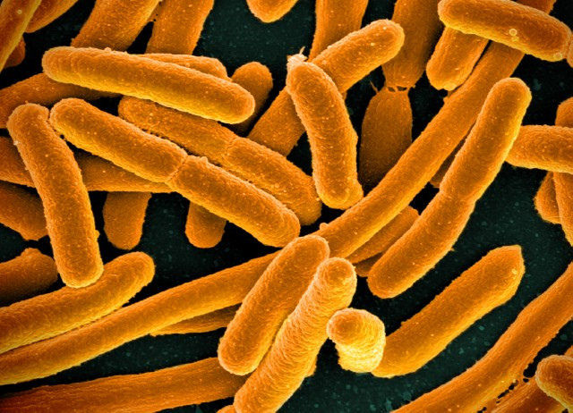 Gene that makes bacteria immune to last-resort antibiotic can spread