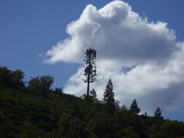 What a pretty cell tower.