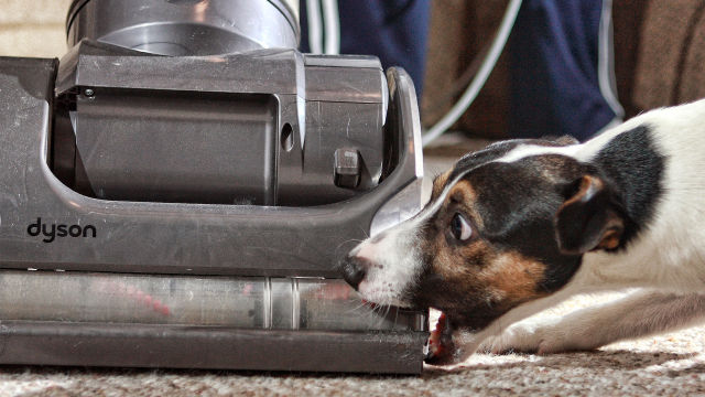 """Dyson loses appeal to change """"misleading"""" EU energy labelling laws"""