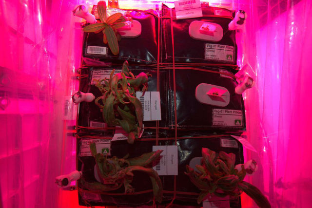 Scott Kelly took a photo of the International Space Station's new harvest of veggies.
