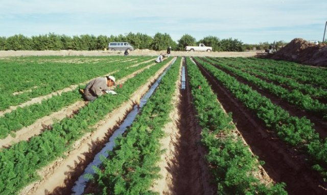 Hot and dry conditions hammer crops that can tolerate cold and floods