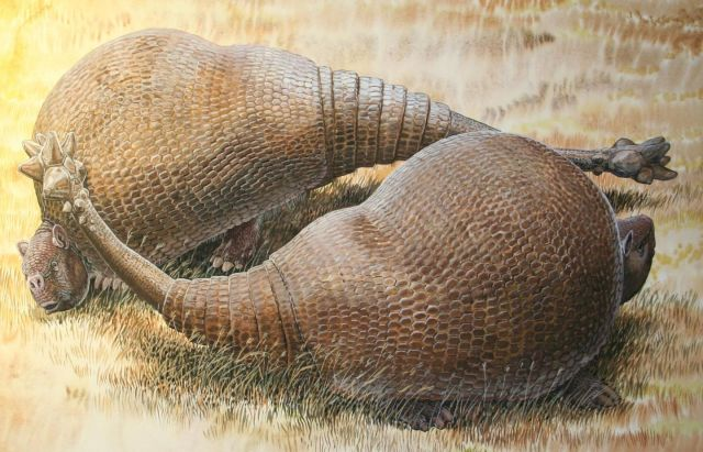 Two giant Glyptodonts, covered in solid shields of armor, smash each other's little faces with spiked club tails. Just another day in the Pleistocene.