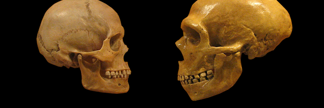 Not-so-hostile takeover: Human Y chromosome displaced the Neanderthals' version – Ars Technica
