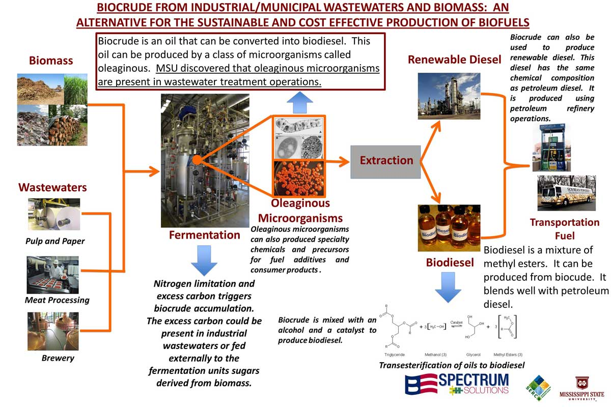 a research on biomass and biofuels as alternative sources of energy Renewable hydrocarbon biofuels can be produced from various biomass sources these include lipids (such as vegetable oils, animal fats, greases, and algae) and cellulosic material (such as crop residues, woody biomass, and dedicated energy crops).