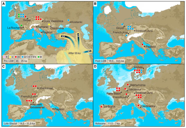 In this image, you can see the clades of the people who the team sequenced, and how they fared over time. The R and U clades are all descended from the N clade. Note that M is present until 25 thousand years ago, when the ice age begins.