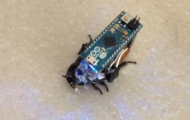 Make your own cyborg cockroach for under $30