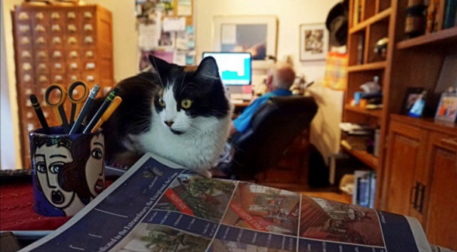 The social scene at a home office is a very, very different thing from traditional setups. (Cat did not watch this week's <em>Better Call Saul</em> yet.)