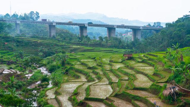 Rice paddies near Bandung, Indonesia.
