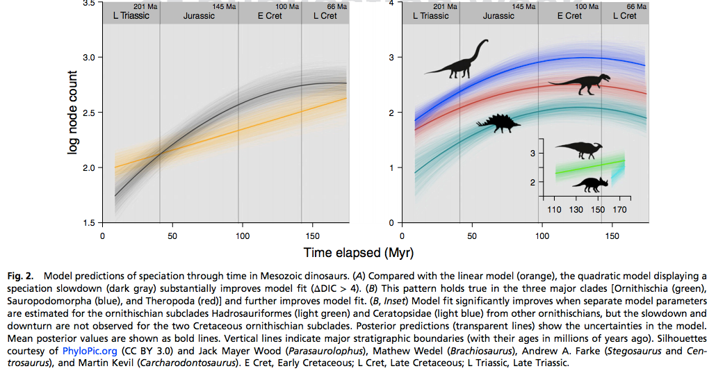Here you can see the slow decline of several subclades of dinosaurs, long before the Chicxulub impact. Note that two subclades were actually speciating at a higher rate, but they were the exceptions that proved the rule.