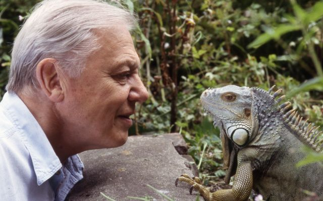 BBC marks Sir David Attenborough's 90th birthday with celebratory app